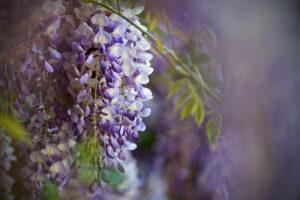 Blüten - derferder.at
