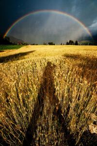Regenbogen - derferder.at