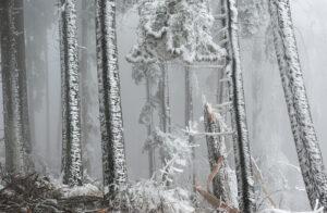 Winterwald - derferder.at