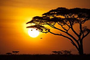 Afrika - derferder.at
