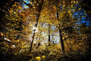 Herbstwald - derferder.at