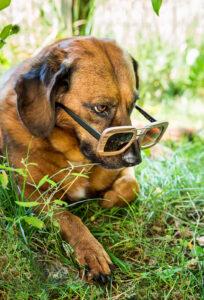Brillenwerbung - derferder.at